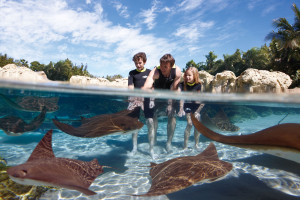 Discovery Cove's 15th Anniversary