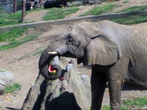 Oakland Zoo Feast for the Beasts