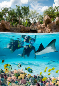 Discovery Cove Florida Resident Offer