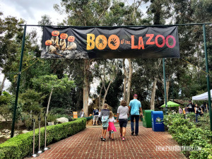 Boo at the LA Zoo 2015 (2)