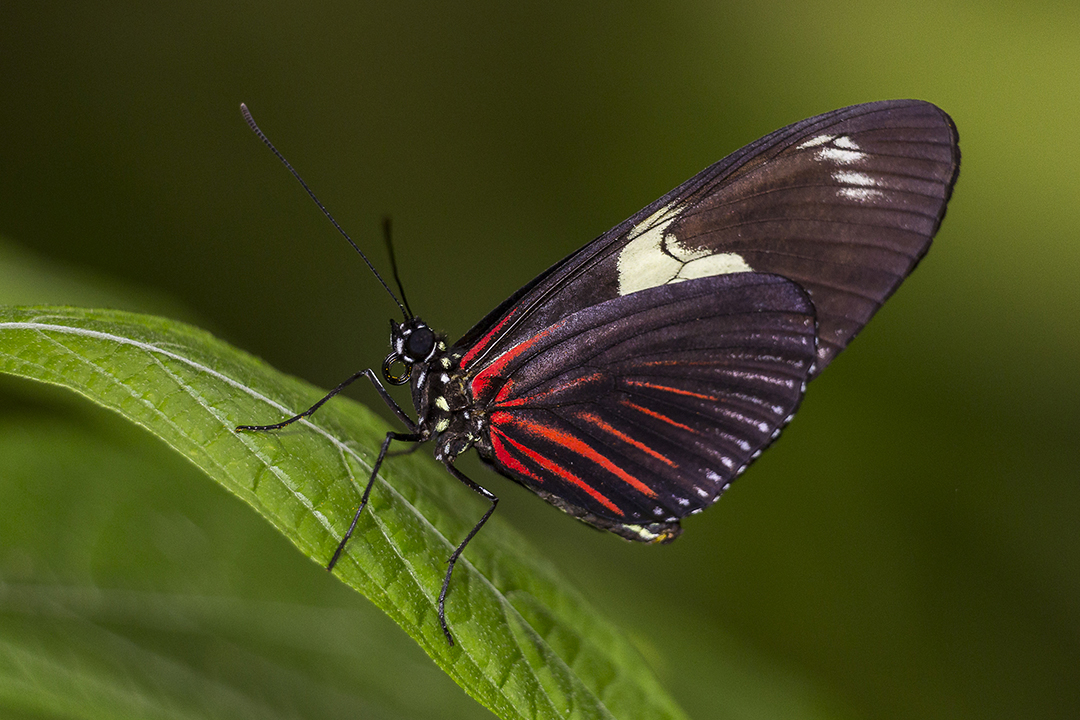 It's Time to Spread Your Wings and Fly, Little Butterfly: Annual Butterfly Jungle Lands at the San Diego Zoo Safari Park